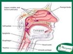fungsi lubang hidung